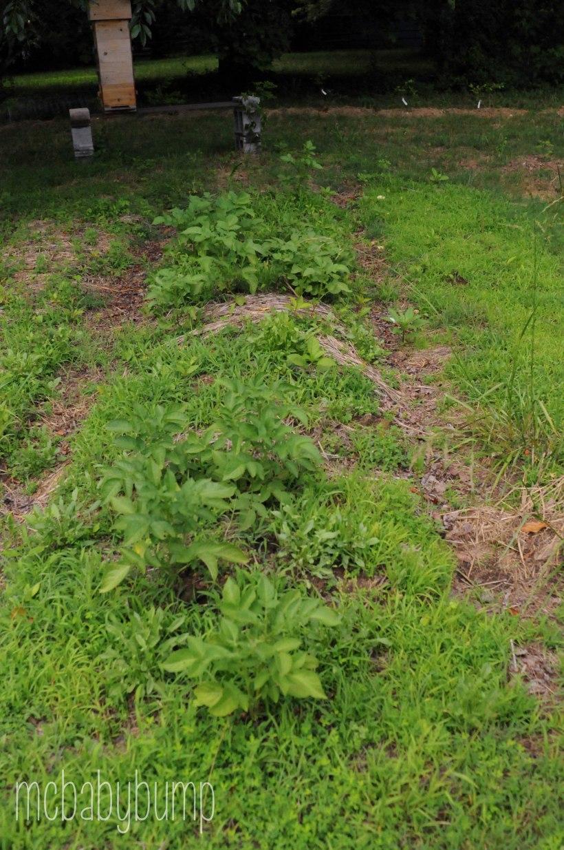 garden (11 of 27)