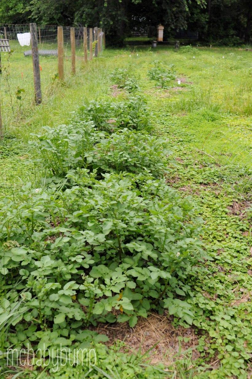 garden (15 of 27)