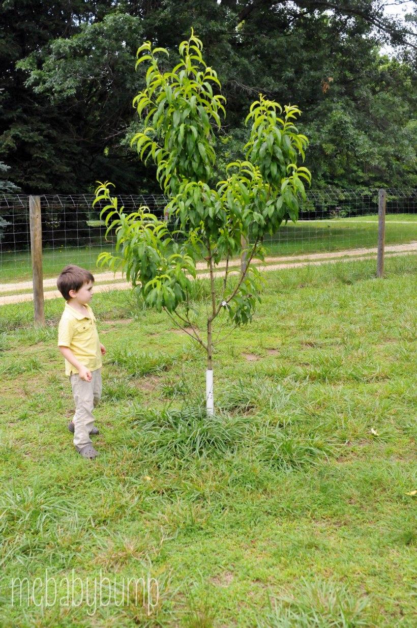 garden (17 of 27)