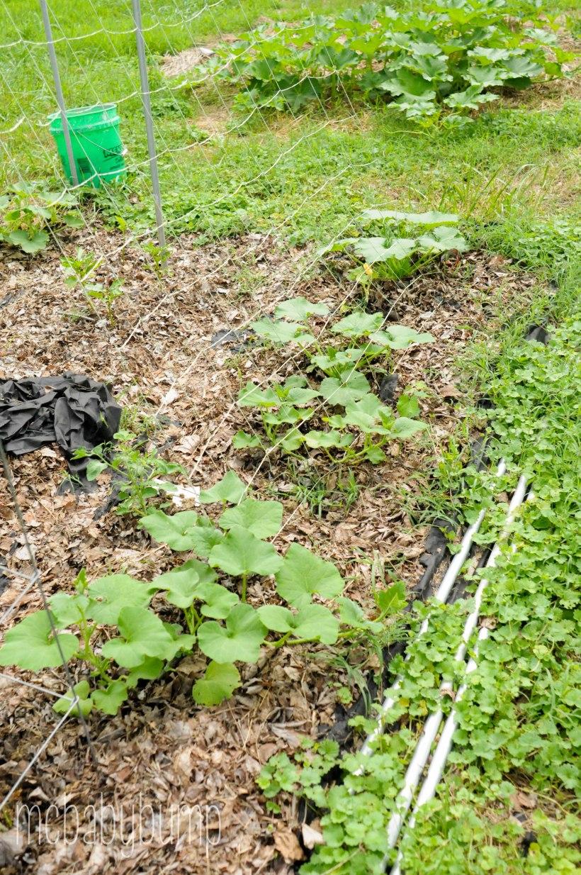 garden (3 of 27)