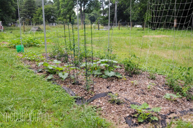 garden (7 of 27)