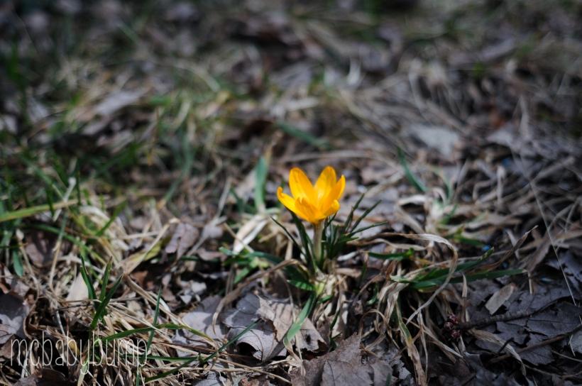 spring-27