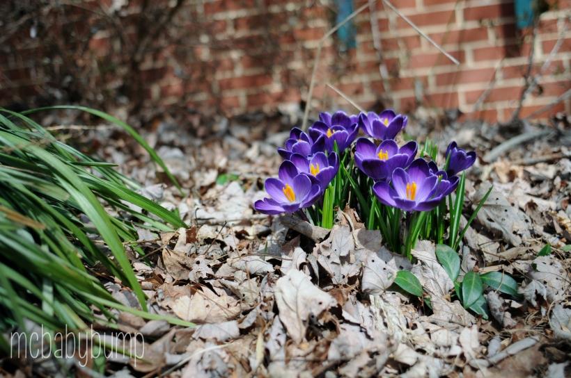 spring-28