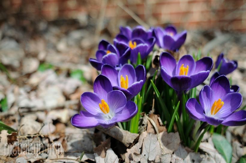spring-31