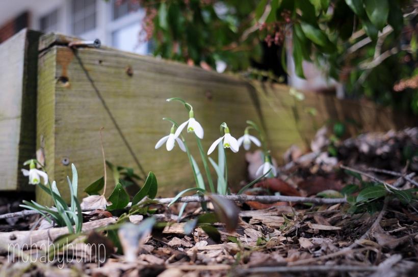 spring-32
