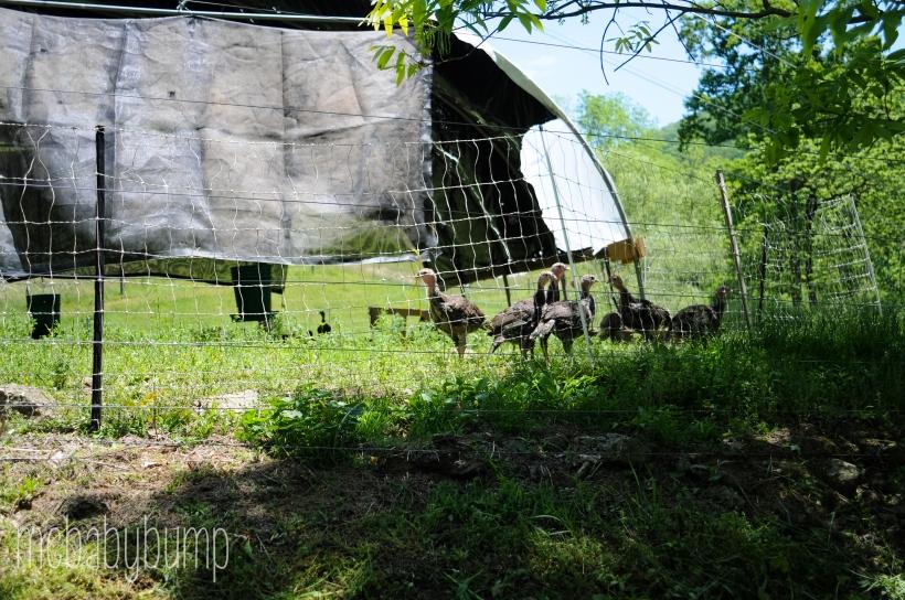 farm-25