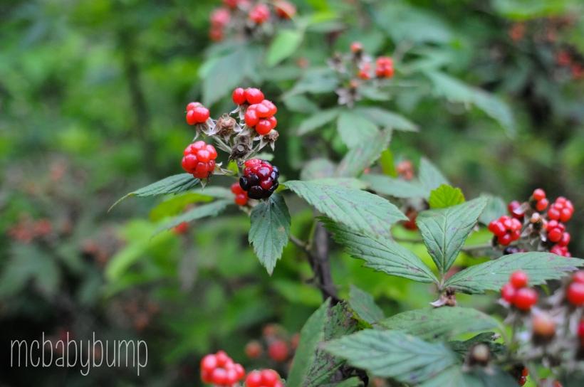 berries-19